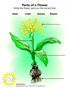 parts of flower pic